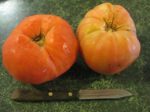 These large, flat tomatoes begged to be stuffed!