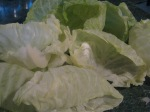 Cabbage leaves.